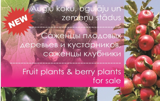 NEW!  Fruit plants and berry plants for sale.
